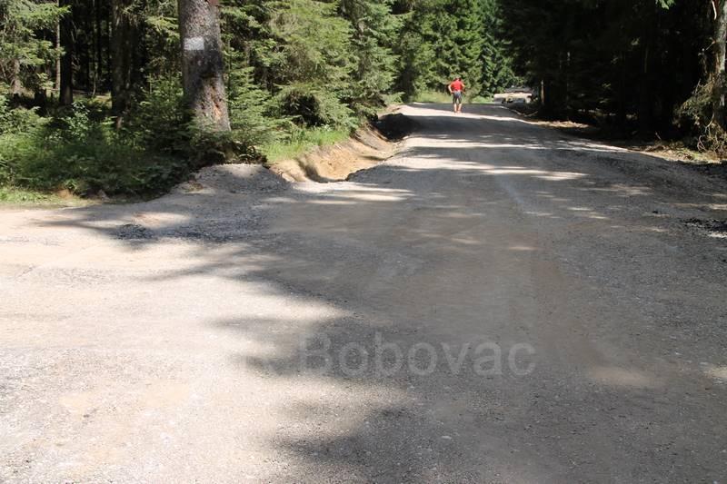 IMG7995-BorovicaPut