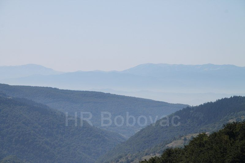 IMG7747-BorovicaPatron